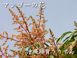 アップルマンゴーの花