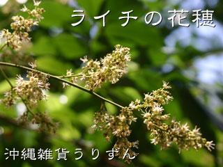 ライチの花,写真,画像