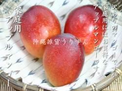 訳ありでお買い得沖縄県産アップルマンゴー