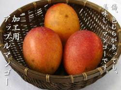訳あり加工用お買い得沖縄県産アップルマンゴー