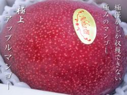 沖縄県知事賞受賞の長嶺さんのアップルマンゴー最高級
