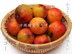 小さくても甘くて美味しい沖縄県産ミニマンゴー