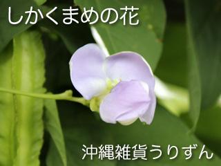 四角豆,花,シカクマメ