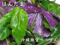 ハンダマ,水前寺菜,金時草