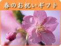 特集:春のお祝いギフト
