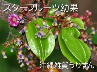 スターフルーツの花と幼果
