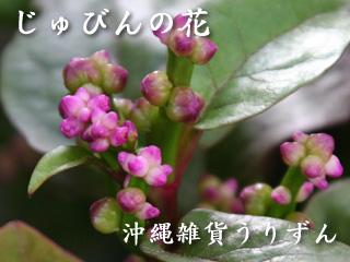 つるむらさきの花