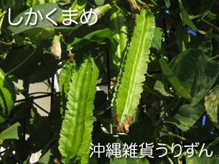 シカクマメ,四角豆